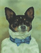 Animal Portraits Pastels Prints - Showtime Boo Print by Pamela Humbargar