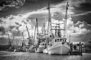 Shrimp Boat Prints - Shrimpboat Fleet Print by Vanessa Kauffmann