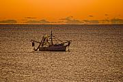 Shrimp Boat Prints - Shrimping in the Morning Print by Ches Black