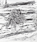 Inger Hutton Art - Shrub in Sedimentary Rock by Inger Hutton