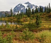 Picture Lake Posters - Shuksan Autumn Poster by Mike Reid
