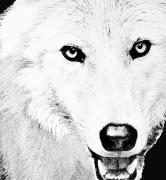 Shy Wolf Print by Debra     Vatalaro
