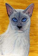 Animals Pastels Originals - Siam by Jan Amiss