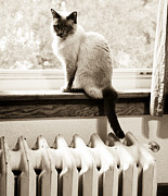 Old Heater Photo Posters - Siamese Cat at Window Poster by Marilyn Hunt