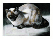 Pet Drawing Drawings Posters - Siamese Cat Poster by Keith QbNyc