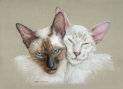 Cat Portraits Pastels Prints - Siamese if you please Print by Mamie Greenfield