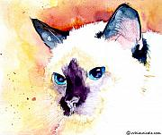 Siamese Paintings - Siamese by Jo Lynch