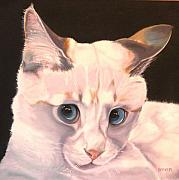 Kitten Prints Posters - Siamese Rescue - Gem of a Kitten Poster by Susan A Becker