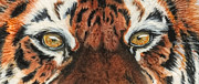 The Tiger Painting Framed Prints - Sib Tig Eye Framed Print by Laurie Bath