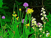 Montana Digital Art - Siberian Chive and Dwarf Sunflower and Death Camas on Highline Trail by Ruth Hager