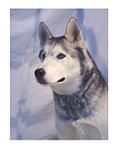 Siberian Husky Digital Art - Siberian Husky 162 by Larry Matthews
