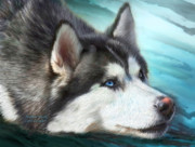 Husky Mixed Media Posters - Siberian Husky Poster by Carol Cavalaris