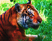 Tiger Digital Art Prints - Siberian Tiger . Photoart Print by Wingsdomain Art and Photography