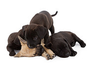 Pet Photo Prints - Sibling Rivalry Print by Susan  Schmitz