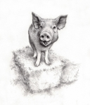Caricature Drawings Metal Prints - Sid the Pig Metal Print by Tim Thorpe