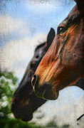 Equine Photo Posters - Side by Side Poster by Darren Fisher