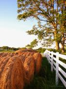 Tennessee Hay Bales Photo Framed Prints - Side-By-Side Framed Print by Todd A Blanchard
