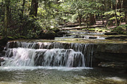 Swallow Falls State Park Art - Side Creek at Swallow Falls State Park by William Kuta