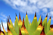 Sausalito Photo Prints - Side View Of Cactus On Blue Sky Print by Greg Adams Photography
