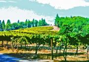 California Vineyard Posters - Sierra Foothills Vineyard Poster by Charlette Miller