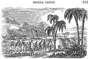 Sierra Leone: Slave Trade Print by Granger