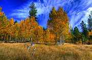 Aspen Trees Prints - Sierra Nevada Fall Colors Lake Tahoe Print by Scott McGuire