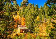 Rustic Colors Posters - Sierra Nevada Rustic Americana Barn with Aspen Fall Color Poster by Scott McGuire
