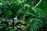 Bromeliads Glass - Sierra Palms Waterfall El Yunque by Thomas R Fletcher