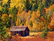 Aspen Fall Colors Photos - Sierra Solitude by Scott McGuire