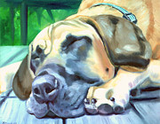 Great Dane Oil Paintings - Siesta - Great Dane by Lyn Cook