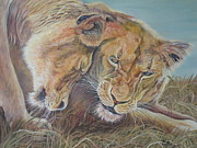 Wildcats Paintings - Siesta Time by Callie Smith