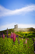 Lupines Framed Prints - Signal Hill in St. Johns Newfoundland Framed Print by Elena Elisseeva