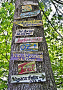 Susan Leggett Art - Signs on a Tree by Susan Leggett