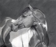 Horses Drawings - Silence in a Moment by Nichole Taylor