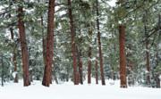 Sandra Bronstein - Silence of the Woods