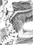 Wings Drawings Prints - Silent Flight Print by Ron Bissett
