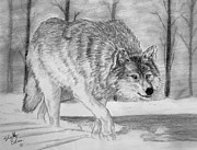 Grey Wolf Mixed Media Framed Prints - Silent Gait Framed Print by Shelley Blair