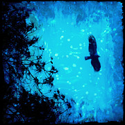 Night Hawk Prints - Silent Night Print by Katya Horner