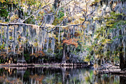 Big Cypress Bayou Photos - Silent Reflection by Lana Trussell