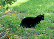 Black Cat Photos Photos - Silent Stalker by Cheryl Poland