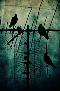 Crows Framed Prints - Silent Threats Framed Print by Andrew Paranavitana