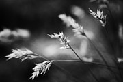 Wayside Photos - Silently - black and white by Hideaki Sakurai
