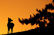 Animals In The Wild Posters - Silhouette Deer Poster by Onejoshuatree