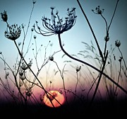 Sunset Photography Prints - Silhouette Flower Print by Luis Mariano González