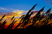 Abstract Landscape Art - Silhouette  Oats by Matthew Trudeau