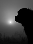 Dog Photographs Photos - Silhouette of a friend  by Roy Chen-Campbell