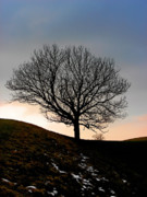 Gloomy Trees Posters - Silhouette of a tree on a winter day Poster by Christine Till