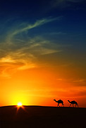 Arabia Framed Prints - Silhouette Of Camels At Sunset,saudi Arabia Framed Print by I hope you like my photos