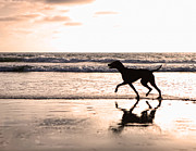 Ocean Sunset Prints - Silhouette of dog on beach at sunset Print by Susan  Schmitz