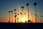Lens Flare Posters - Silhouette Of Palm Trees At Sunset Poster by Photo by Natalie Wilson